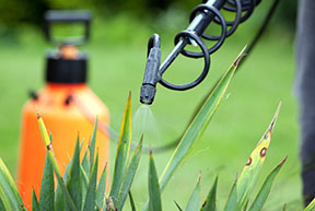Budget Services And Supplies Lawn Care Amp Exterior